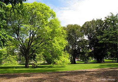 新緑が美しい春のメルボルン