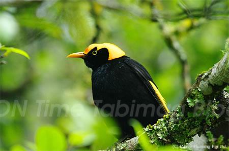熱帯雨林は鳥たちの楽園