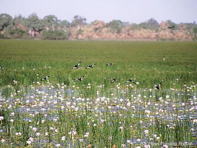 夢を見てるかと思うほど美しい湿原が広がる、カカドゥ国立公園