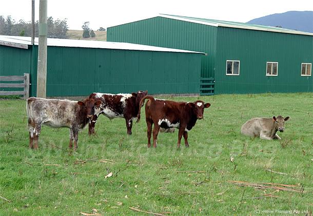 狂牛病発症は牛たちが被曝したせい?