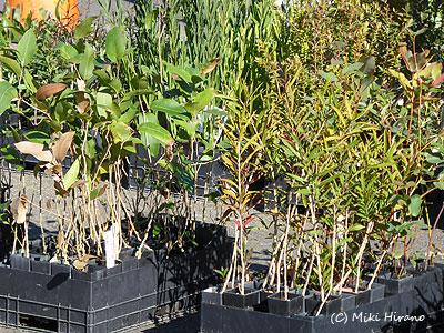庭の環境に適した植物を選ぶ