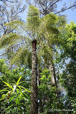 オーストラリアの固有種を増やし、生態系を保護する