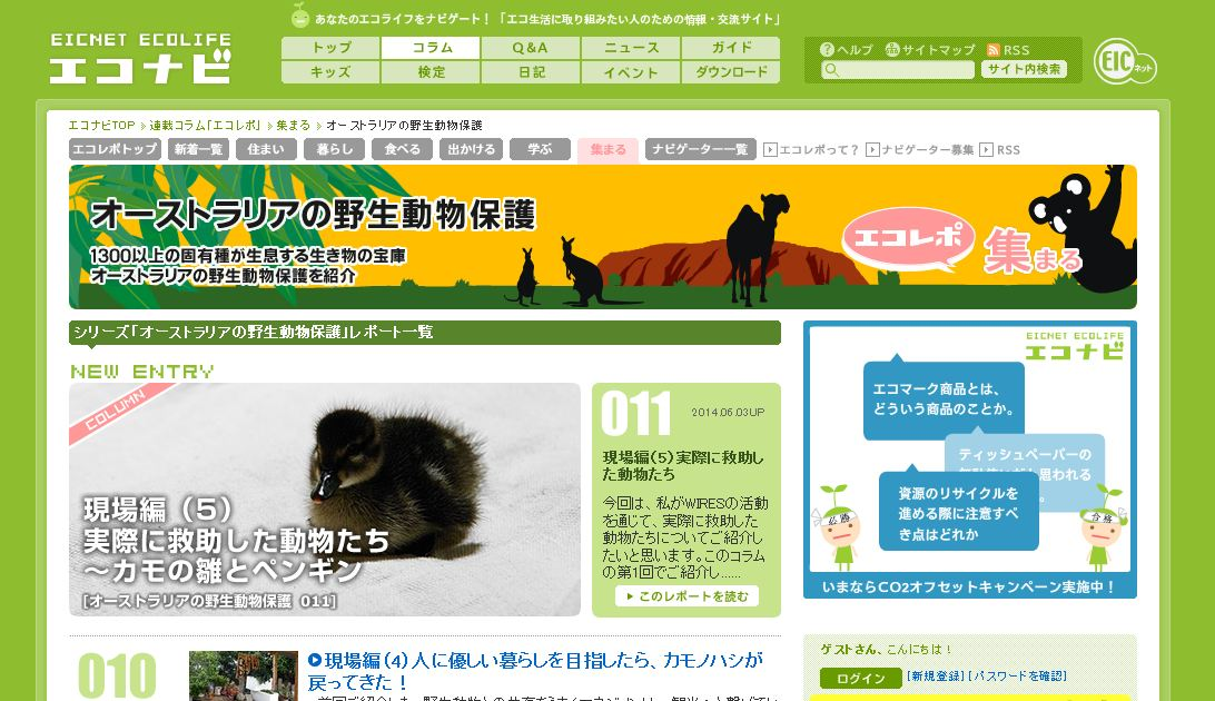 実際に救助した動物たち -カモの雛とペンギン ~エコレポ