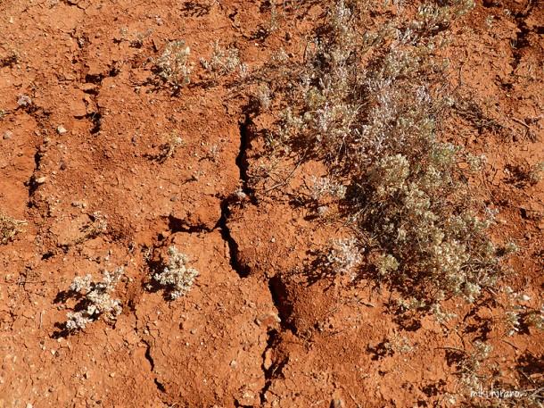 乾燥してひび割れた大地でも、たくましく生きる植物に感動!