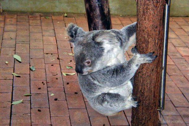 さらに木に登って逃げる(笑)